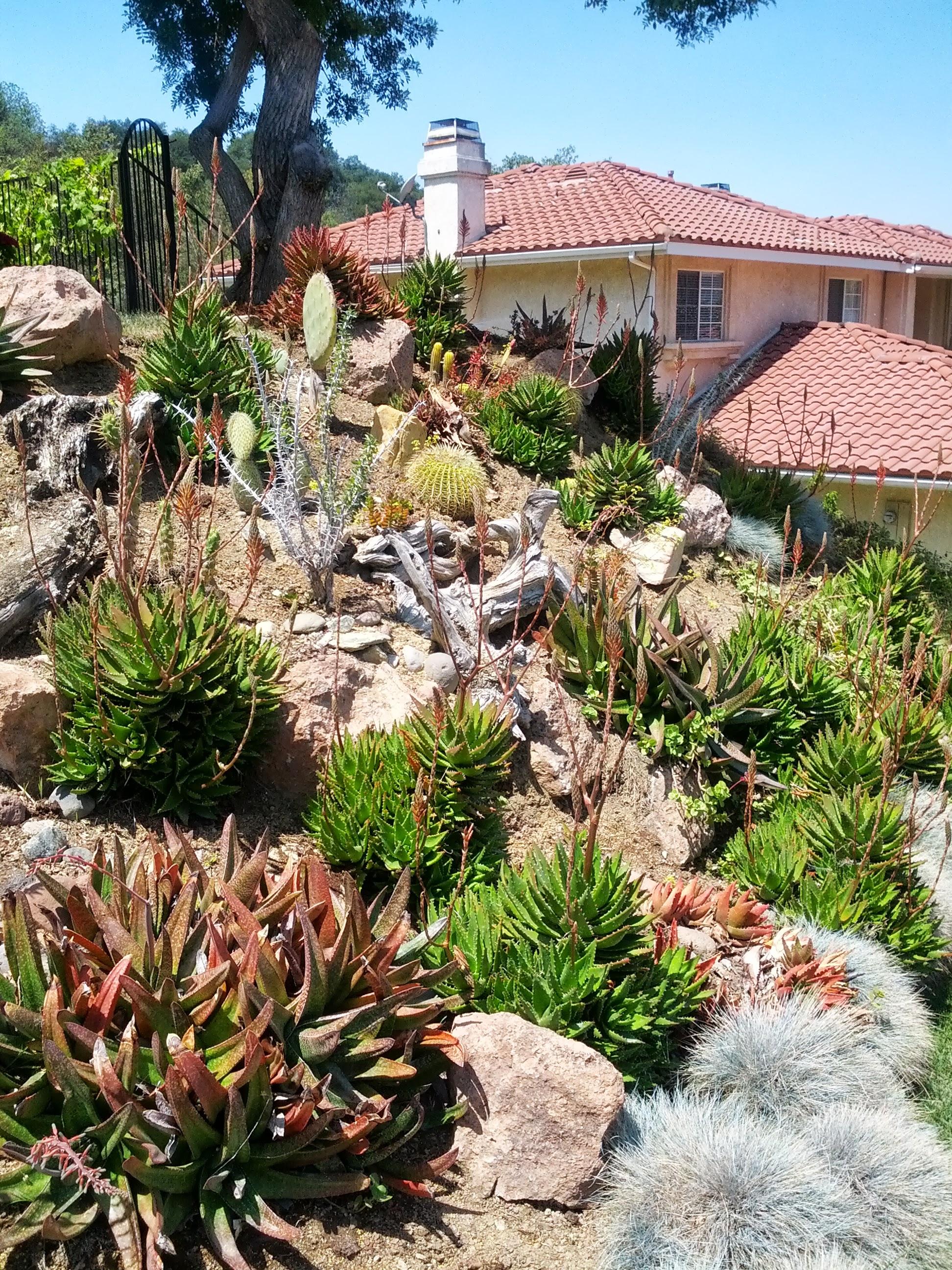 Planting A Slope – The Smarter Gardener